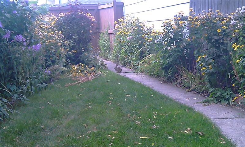 rabbit-2rz
